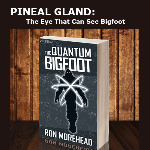 Ron_Morehead_quantum_bigfoot_Pineal Gland The Eye That Can See Bigfoot